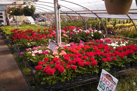 Come Visit Our Garden Center